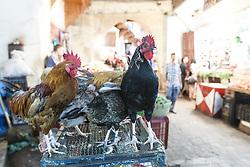Rooster in the market, Fes al Bali medina, Fes, Morocco