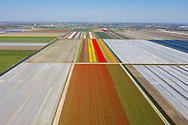 Nederland, Alkmaar, 20190405<br /> Bloembollenvelden bij Alkmaar. <br /> <br /> Foto: (c)Michiel Wijnbergh