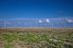 08 June 2009: Grain sprouts beneath the towering mills and turbines of the Twin Groves Wind Farm located east of Bloomington Normal Illinois is the largest in the United States.  There are currently considerations to add even more turbines to the north of the existing field.