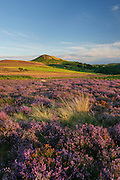 Hawnby Hill in late summer, North York Moors