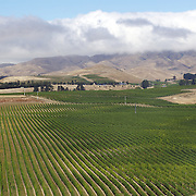 The Awatere Valley is the smaller of two sub-regions within the famous Marlborough wine region in the South Island, New Zealand. It lies south-east of the region's main wine-growing area, the Wairau Valley....The Marlborough wine region is New Zealand's largest wine producer. The Marlborough wine region has earned a global reputation for viticultural excellence since the 1970s. It has an enviable international reputation for producing the best Sauvignon Blanc in the world. It also makes very good Chardonnay and Riesling and is fast developing a reputation for high quality Pinot Noir. Of the region's ten thousand hectares of grapes (almost half the national crop) one third are planted in Sauvignon Blanc. Marlborough, New Zealand, 14th February 2011. Photo Tim Clayton