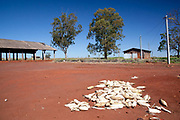 Corn maize drying on the ground in a Guarani village. The Guarani are one of the most populous indigenous populations in Brazil, but with the least amount of land. They mostly live in the State of Mato Grosso do Sul and Mato Grosso. Their tradtional way of life and ancestral land is increasingly at risk from large scale agribusiness and agriculture. There have been recorded cases and allegations of violence between owners of large farms and the Guarani communities in this region.
