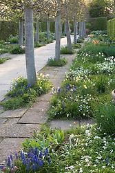 The Lime Walk at Sissinghurst Castle Garden in spring