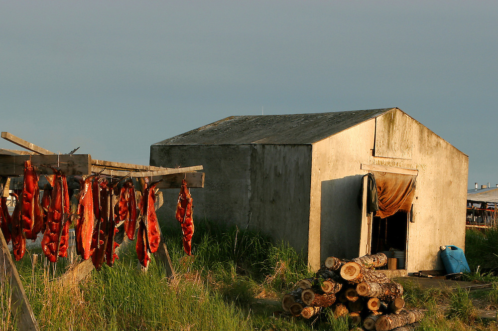 USA, Alaska, Togiak National Wildlife Refuge, A sunset view of salmon drying outside on a drying rack inthe Yup'ik Village of Quinhagak on the Kanektok River. The salmon is part of the subsistence gathering carried on for centuries by the first Alaskans.