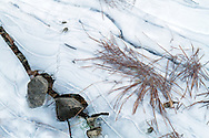 Shoreline plants trapped in the ice at Silver Lake in Silver Lake Provincial Park near Hope, British Columbia, Canada