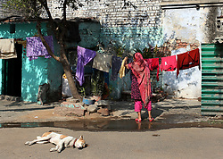 © Licenced to London News Pictures. 17//11/2014. Delhi. India.  <br /> General view of a local resident hanging out her washing in the sun whilst a dog sleeps in Delhi, India, November 17th 2014.<br /> Photo Credit: Susannah Ireland