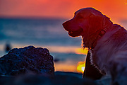 Labrador dog on the beach with its owner at sunset