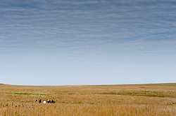 Heather Brown, Chief of Interpretation at the Tallgrass Prairie National Preserve, leads a group of visitors on a tour of the prairie on a fall day in October. The 10,894-acre Tallgrass Prairie National Preserve is located in the Flint Hills of Kansas in Chase County near the towns of Strong City and Cottonwood Falls. Less than four percent of the original 140 million acres of tallgrass prairie remains in North America. Most of the remaining tallgrass prairie is in the Flint Hills in Kansas. Tallgrass Prairie National Preserve is the only unit of the National Park Service dedicated to the preservation of the tallgrass prairie ecosystem. The Tallgrass Prairie National Preserve is co-managed with The Nature Conservancy.