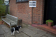 A King Charles pet dog waits for its owner outside St. Barnabas community hall in Dulwich Village in the south London borough of Southwark, serving as a polling station for the UKs General Election 2 weeks before Christmas, on 12th December 2019, in London, England.