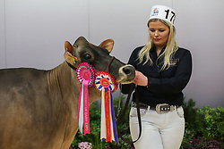 © Licensed to London News Pictures. 11/03/2017. Carlisle, UK. Steph Whittaker with her prize winning Jersey cow at the annual UK Dairy Expo. The event, one of the biggest of it's kind in the UK, is in it's sixth year and is held at the Borderway Exhibition Centre in Carlisle Cumbria.  Photo credit : Ian Hinchliffe/LNP