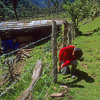 Homesteader in cloud forests of upper Amazon repairs fenc.