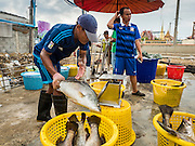 01 OCTOBER 2015 - MAHACHAI, SAMUT SAKHON, THAILAND:  Workers sort fresh fish in the market in Mahachai, one of Thailand's largest fishing ports. Thailand's fishing industry had been facing an October deadline from the European Union to address issues related to overfishing and labor practices. Failure to adequately address the issues could have resulted in a ban on Thai exports to the EU. In September Thai officials announced that they had secured an extension of the deadline. Officials did not say how much extra time they had to meet the EU goals. Thailand's overall annual exports to the EU are between 23.2 billion Thai Baht and 30 billion Thai Baht (US$645 million to US $841 million). Thailand's total fish exports were worth about 110 billion baht in 2014.   PHOTO BY JACK KURTZ