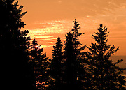 Tall pines are silhouetted against the rich orange summer sky at sunset.