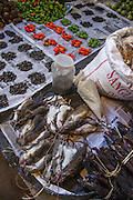 Rats sold in market for food<br /> Apatani Tribe<br /> Ziro Valley, Lower Subansiri District, Arunachal Pradesh<br /> North East India