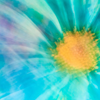 Macro Lens Painting of a blue daisy.