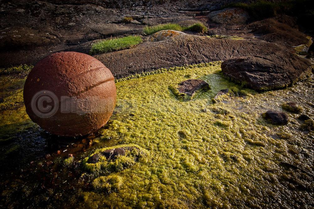En rusten gankule på gulgrønt alge-underlag utgjør et fint bilde.