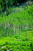 Horseback riding near Ashcroft (outside Aspen), Colorado USA