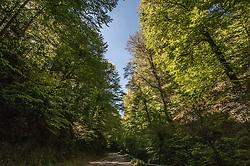 """La Riserva naturale Foresta Umbra è una area naturale protetta posta all'interno del Parco nazionale del Gargano. Si estende nella zona centro-orientale del Gargano, a circa 800 metri di altitudine. Il nome """"umbra"""", deriva dal latino e significa cupa, ombrosa, come allora, e come in parte oggi, appare."""