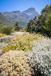 January 4, 2018 - Cape Town, Western Cape, South Africa - View of the fauna at the Kirstenbosch Botanical Gardens in Cape Town, South Africa (Credit Image: © Edwin Remsberg / Vwpics/VW Pics via ZUMA Wire)
