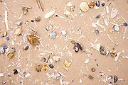 Shells - including mussels, razor clams, cockles - on sandy beach at Titchwell in North Norfolk, UK