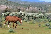Wild Horses photography from Southern Arizona