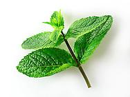 Fresh mint leaves