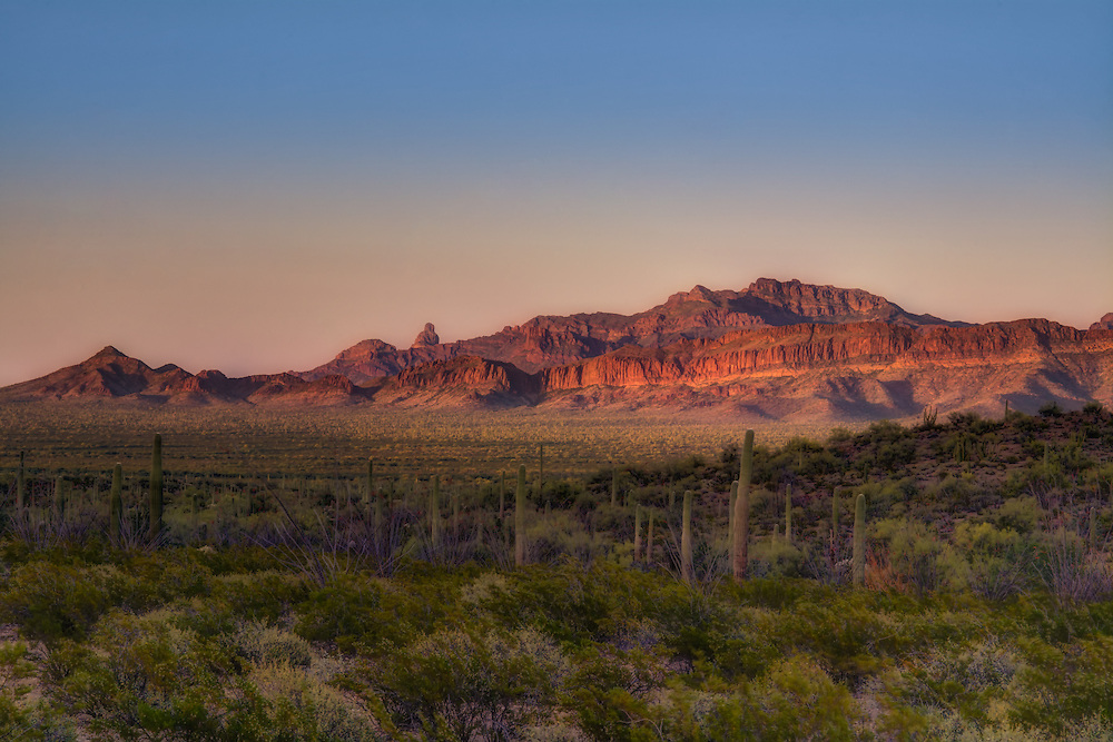 Golden hour near the Ajo Mountains in the Sonoran Desert! Big skies, lowlands filled with saguaro and organ pipe cacti, and loads of wildlife and incredible wildflowers - springtime in Arizona is about as beautiful as nature gets!
