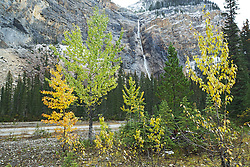 Autumn color, Takakkaw Falls, Yoho National Park