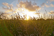 In the sunset grass