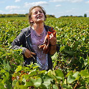 A polish harvest worker at Champagne Mumm at Mailly vineyard.G. H. Mumm & Cie, situated in Reims in northern France, is one of the largest Champagne producers and it is currently ranked 3rd globally based on number of bottles sold. The company is owned by Pernod Ricard.
