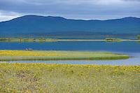 River delta area in Nikkaluokta, Greater Laponia rewilding area, Lapland, Norrbotten, Sweden