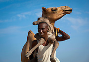 Puckering up to hyenas, cuddling pythons and caressing camels... these images show just how crazy the world is about animals<br /> <br /> An intrepid photographer has scoured the planet snapping people and their pets.<br /> French photographer Eric Lafforgue, travelled everywhere from Easter Island to North Korea to capture on camera mankind's love for animals.<br /> Taken over a period of ten years, each picture gives the viewer a glimpse into the types of pets people choose to own and the relationships they forge with them.<br /> <br /> <br /> Eric Lafforgue spent a decade, from 2005 to 2015, taking photographs of people communing with animals  He ventured as far afield as Ethiopia, Benin, Saudi Arabia, Panama, North Korea, Myanmar and Kyrgyzstan <br /> Among the most astonishing photographs is a man holding meat in his mouth and feeding a hyena  The Frenchman said: 'It is a great lesson of life, you need to take care of the animal to survive'<br /> <br /> Photo shows: A Man Is Holding A Baby Camel On His Back, Lughaya Area, Somaliland