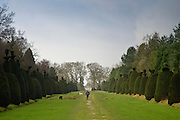 Woman walks dogs through Yew Tree Avenue, a collection of clipped yew trees in Clipsham, Lincolnshire, UK