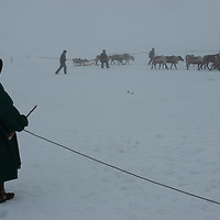 North of the Arctic Circle in Russia, 77-year old Marie Terentéva, wears a reindeer-skin lined malitsa robe to keep her warm as she waits to herd reindeer into the pen. She is one of the matriarchs of the last nomadic Komi reindeer herding clan.