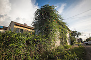 June 11, 2015, New Orleans, LA, Blighted home overgrown with vines almost ten years after Hurricane Katriana.