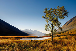 A lone tree at the head of Loch Etive in autumn at the end of Glen Etive, Highlands of Scotland<br /> <br /> (c) Andrew Wilson   Edinburgh Elite media