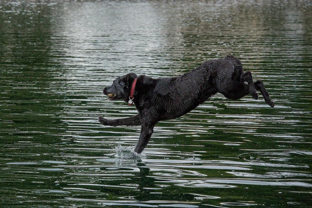 Puppy, Kirkland, Washington, United States