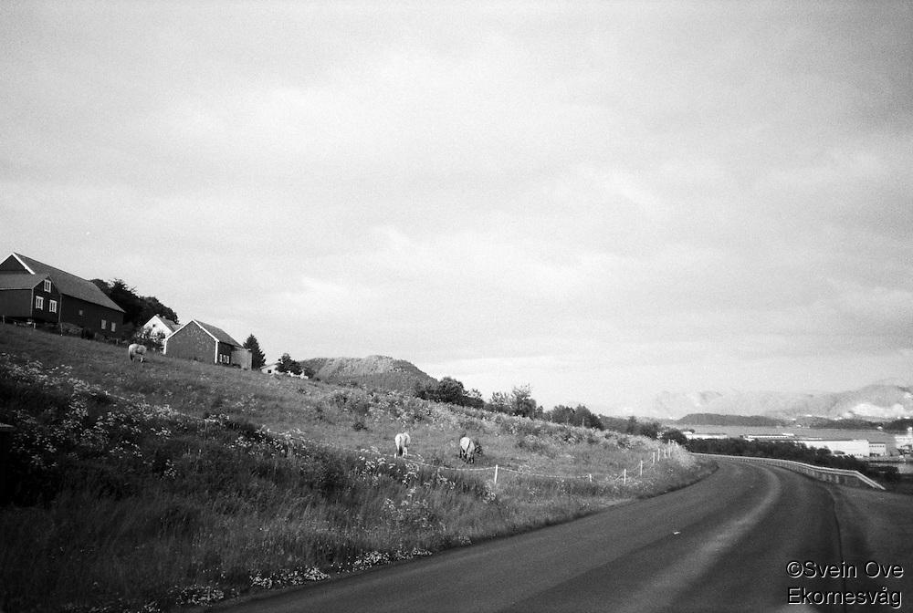 Hester.<br /> Foto: Svein Ove Ekornesvåg