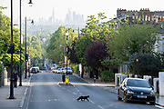 With the London skyline in the far distance, a black cat crosses the steep gradient of Gypsy Hill in Crystal Palace, on 16th June 2021, in London, England.