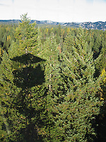 Hoodoo Fire Lookout shadow on the forest in the Umatilla National Forest, Blue Mountains, Oregon, USA