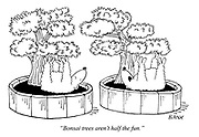 """Bonsai trees aren't half the fun."""