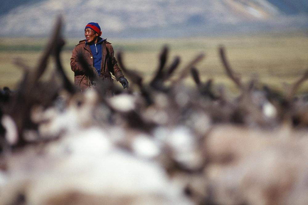 Yura Kelentegrey prepares to lassoe reindeer, Chukchi reindeer camp, Val 'karvaam Valley, Chukotsk Peninsula, Russia