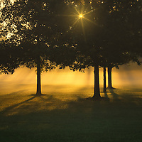 """""""Foggy Burst of Morning""""<br /> <br /> A magical morning with golden fog and a sunburst through trees in silhouette!!"""