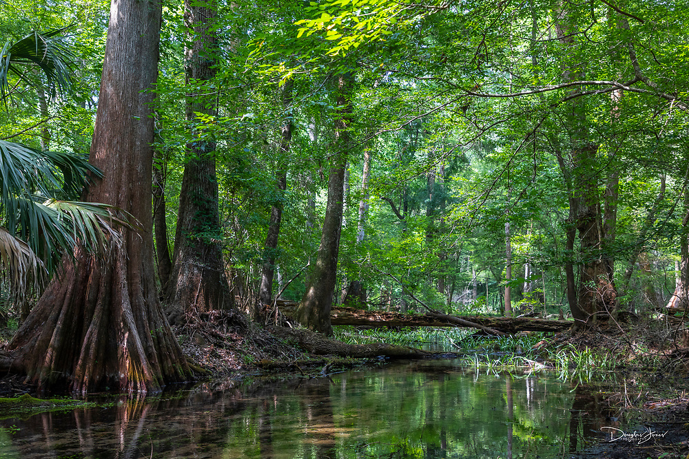 High Springs, FL - JUNE 2: Images from Gilchrist Blue Springs State Park in High Springs, FL on June 2, 2020.