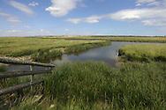 Elmley RSPB Reserve, Kent