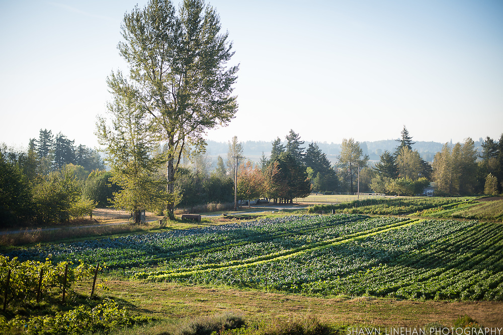 Landscape of the field and rows of Dancing Root Farm.
