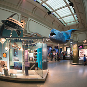 The marine life hall at the Smithsonian Natural History Museum on the National Mall in Washington DC.