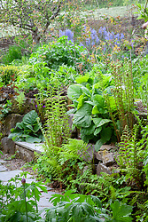 Ferns growing in the stone walls at Glebe Cottage