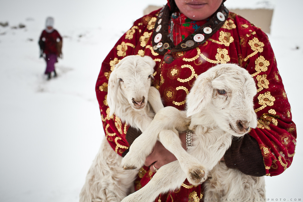Atom Bubu, a daughter of the late Khan, carries a pair of lambs to be reunited with their mothers at milking time. For the rest of the day, the vulnerable babies are kept warm inside the dung fire heated huts. Outside in the bitter cold they would have no chance of survival..