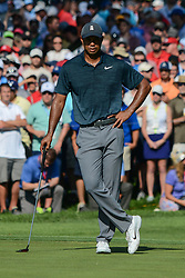 August 9, 2018 - Town And Country, Missouri, U.S - TIGER WOODS from Jupiter Florida, USA watches others putt on the 14th green during round one of the 100th PGA Championship on Thursday, August 8, 2018, held at Bellerive Country Club in Town and Country, MO (Photo credit Richard Ulreich / ZUMA Press) (Credit Image: © Richard Ulreich via ZUMA Wire)